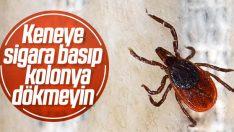 Türkiye'de kene vakalarında ölüm oranı yüzde 5