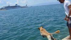 Deniz tutkunu Miço, ilgi odağı oldu