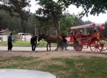Turistlerin gözdesi fayton, atlara eziyet olmaya devam ediyor