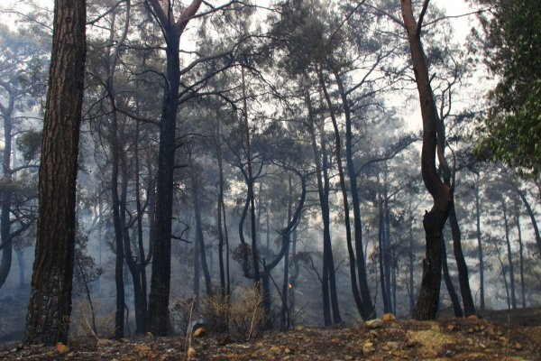 Bakan Pakdemirli Dalaman'daki yangınla ilgili bilgi verdi