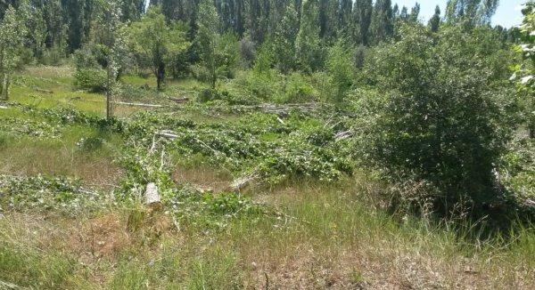 ODTÜ'de ağaç kesimi başladı