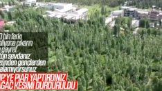 ODTÜ'de ağaç kesimi durduruldu