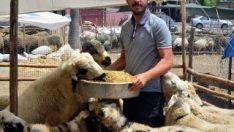 Adana'da bankacı olamayan genç koyun satıcısı oldu