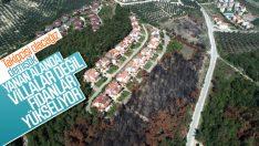 Bursa'da geçtiğimiz yıl orman yeniden ağaçlandırıldı