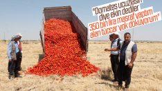 Diyarbakırlı çiftçi domatesini tarlaya döktü