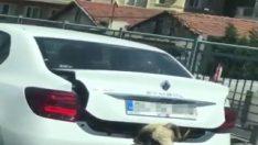 İstanbul'da kurbanlık koyunu bagajda taşıdı