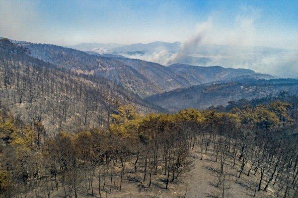 İzmir'deki yangının havadan görüntüsü