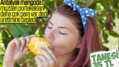 Türkiye ithal ettiği mangoyu artık ihraç ediyor