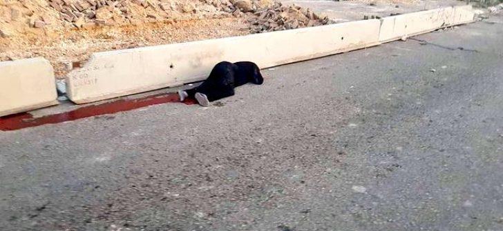 Allah belanızı versin!