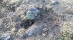 İki kardeşi PKK'nın öldürdüğü kesinleşti