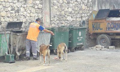 Adanalı temizlik işçisi çöpten topladığı atıklarla köpekleri besliyor