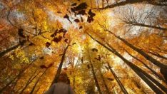Bolu ve Düzce'den tadına doyulmaz sonbahar manzaraları
