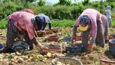 Patates üreticileri, borçları ertelensin istiyor