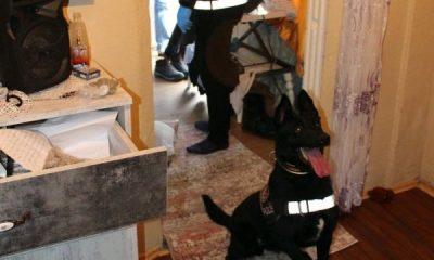 Yalova'da 300 polis ve narkotik köpeklerle operasyon