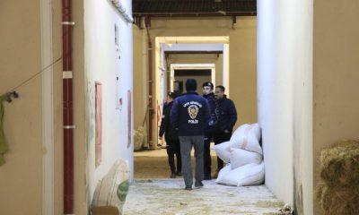 Adana Yeşiloba Hipodromu'nda narkotik uygulaması yapıldı