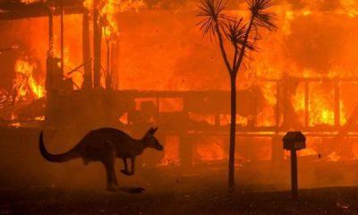 Avustralya'da çıkan yangında son durum