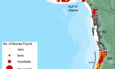 Okyanustaki sıcak su yüzünden 1 milyon kuş öldü