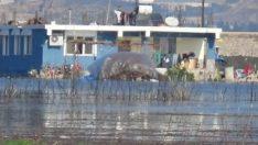 Şiddetli yağış sonrası Amik Ovası sular altında kaldı
