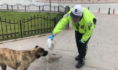 Konya'da sokak hayvanları trafik polisine emanet