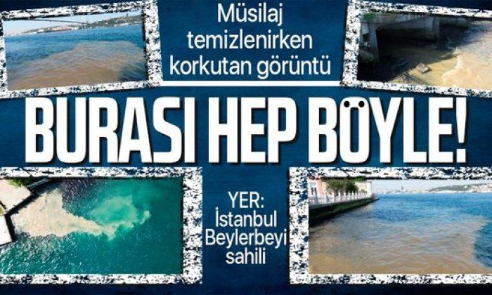 Marmara Denizi'nde deniz salyası temizleme çalışması devam ederken İstanbul Beylerbeyi sahili kahverengi oldu